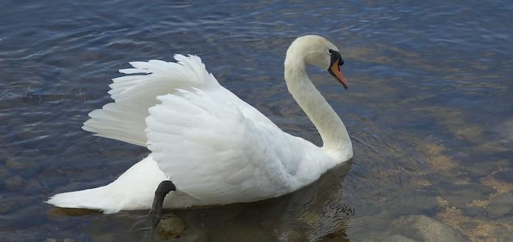 ¿Cuándo se darán cuenta los operadores que Wi-Fi no es el patito feo sino el cisne?