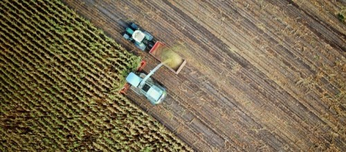 Vivo aprovecha alianzas para involucrarse en el agronegocio