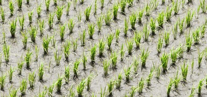 TIM también apuesta al agronegocio: pretende aumentar 600% su cobertura 4G rural para fin de año
