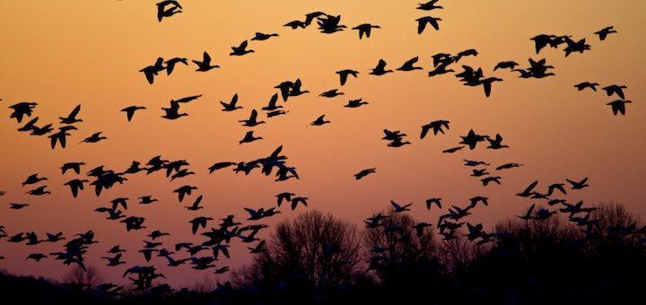 Migrar a la nube no cumple con algunas expectativas clave para dos tercios de las grandes empresas
